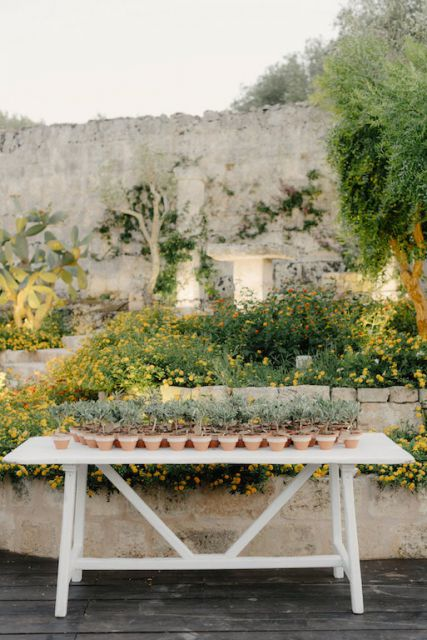 small olive trees as wedding favors in Italy