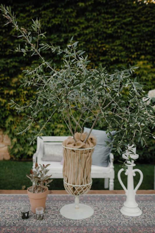 Decoration with olive trees for lounge area at Castello Marchione
