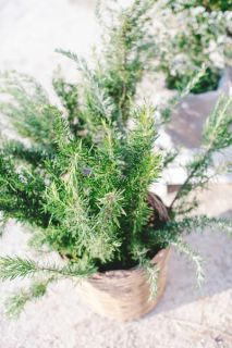 rosemary wedding decor